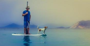 Paddle, stand up, planche, mer, montagne, chien, pagaie